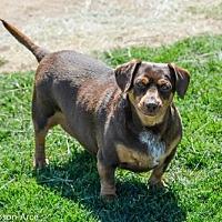 Adopt A Pet :: Gigi - Anaheim, CA