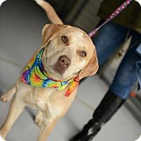 Adopt A Pet :: Nyla - Muldrow, OK