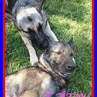 Adopt A Pet :: LADY & ARMANI - White River Junction, VT