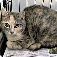 Adopt A Pet :: Ariel - Jefferson, NC
