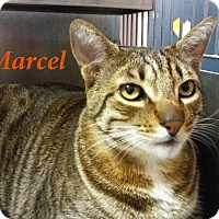 Adopt A Pet :: Marcel - El Cajon, CA