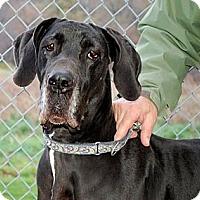 Adopt A Pet :: Sada - Pearl River, NY