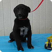 Adopt A Pet :: Phoenix - Humboldt, TN