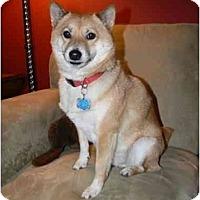 Adopt A Pet :: Rocket (Wisconsin) - Round Lake, IL
