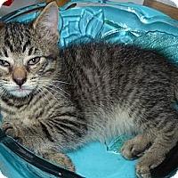 Adopt A Pet :: Max - Lighthouse Point, FL
