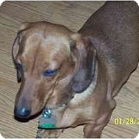 Adopt A Pet :: Bentley - Andrews, TX