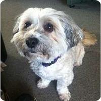 Adopt A Pet :: Teddi - Adoption Pending - Vancouver, BC