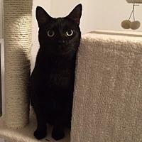 Adopt A Pet :: Salem - Monroe, NC