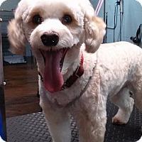 Adopt A Pet :: Chance - Ormond Beach, FL