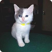 Adopt A Pet :: Providence - Putnam, CT
