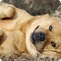 Adopt A Pet :: Zoey - Columbia, TN