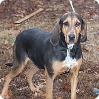 Adopt A Pet :: Ruby - Columbia, TN