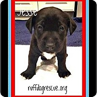 Adopt A Pet :: Jesse - Milton, GA