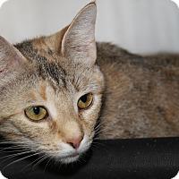 Adopt A Pet :: Cinnabar - Marietta, OH