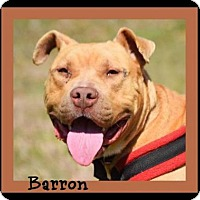 Adopt A Pet :: Barron - Memphis, TN
