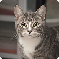 Adopt A Pet :: Ironworks Ave - Edmonton, AB