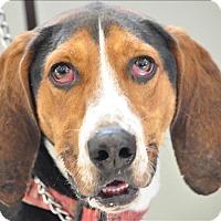 Adopt A Pet :: Zeke - Osage Beach, MO