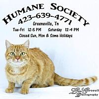 Adopt A Pet :: Petunia - Greeneville, TN