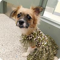 Adopt A Pet :: Tulip - West Deptford, NJ