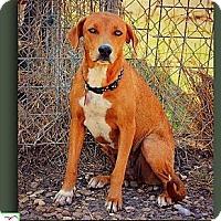 Adopt A Pet :: Liza - Eddy, TX