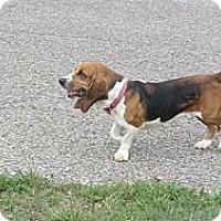 Adopt A Pet :: Hope - Sardis, TN