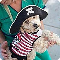 Adopt A Pet :: Eleanor - Mission Viejo, CA