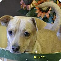 Adopt A Pet :: KEARNY - Higley, AZ