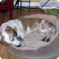 Adopt A Pet :: June Bug - Columbia, SC