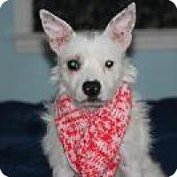 Adopt A Pet :: Candy - Marlton, NJ