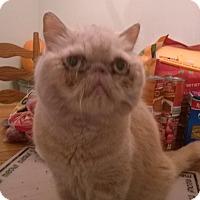 Adopt A Pet :: Claus - Columbus, OH