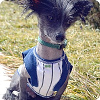 Adopt A Pet :: Rowdy-Adoption pending - Bridgeton, MO