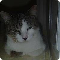 Adopt A Pet :: Eva - Hamburg, NY