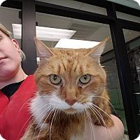 Adopt A Pet :: Big Mama - Gadsden, AL