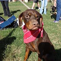 Adopt A Pet :: Clyde - McAllen, TX