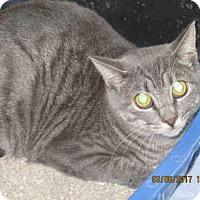 Adopt A Pet :: LOVEY - Lathrop, CA