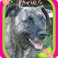 Adopt A Pet :: Aries (Female) - Marianna, FL