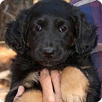 Adopt A Pet :: Lilly - Saratoga, NY