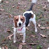 Adopt A Pet :: Loveday - Gainesville, FL