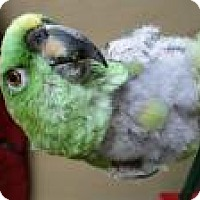 Adopt A Pet :: Sprout - Neenah, WI