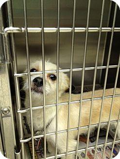Terrier (Unknown Type, Medium) Mix Dog for adoption in Rockaway, New Jersey - Scruffy