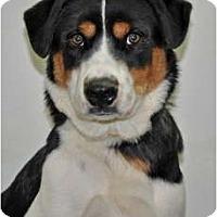 Adopt A Pet :: Ringo - Port Washington, NY