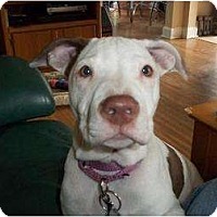 Adopt A Pet :: Tessie - Rochester, NY