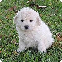 Adopt A Pet :: Bunny - La Habra Heights, CA