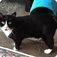 Adopt A Pet :: Noodles - East Hanover, NJ