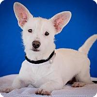 Adopt A Pet :: Freckles - Burbank, CA