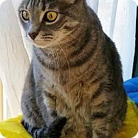 Adopt A Pet :: Bella - Merrifield, VA