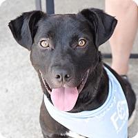 Adopt A Pet :: Boca - Knoxville, TN