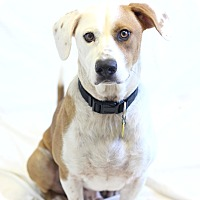 Mixed Breed (Medium) Mix Dog for adoption in Bradenton, Florida - Murray