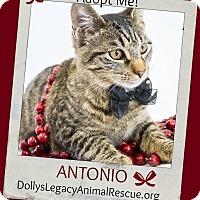 Adopt A Pet :: ANTONIO - Lincoln, NE