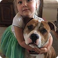 Adopt A Pet :: Baloo - Newfield, NJ